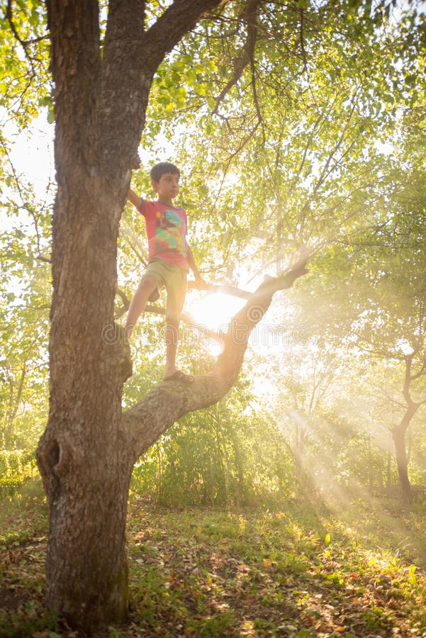 The sun`s rays make their way through the leaves of trees in a garden  at sunset  in summer.  Children sit on a tree and royalty free stock photography