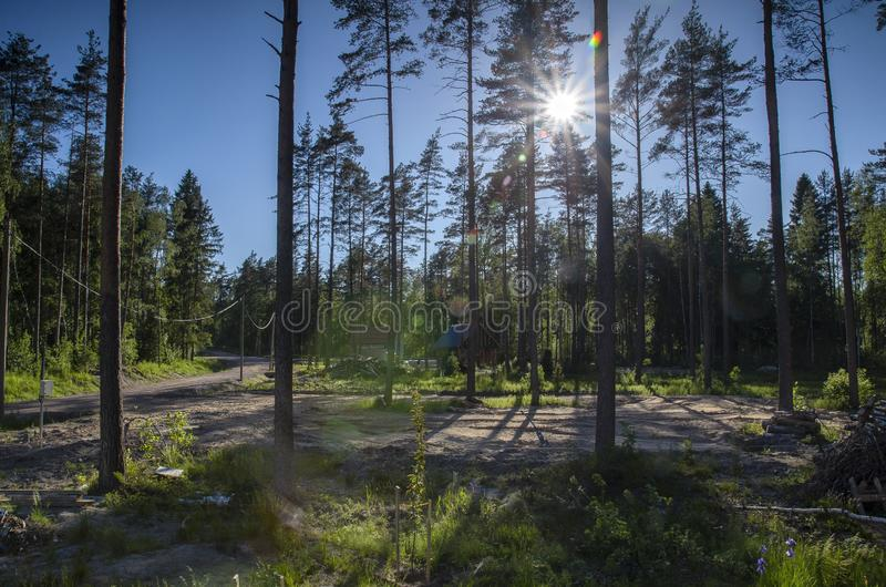 Beautiful forest and life in the forest. building a house in a deep, lifeless pine forest against a background of trees, bright su royalty free stock photography