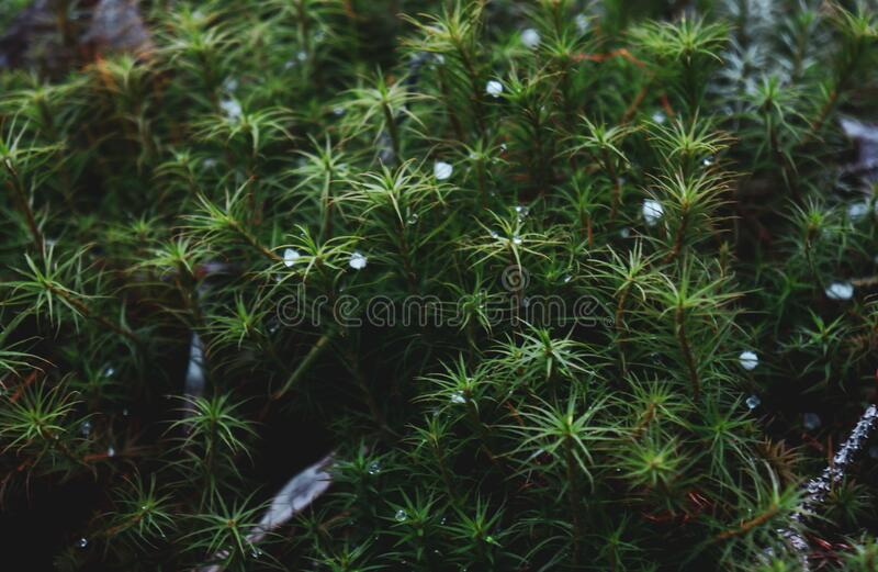 Beautiful Forest Mosaic From Varieties Of Moss With Snowflakes Stock Photo Image Of Nature Needles 176330224