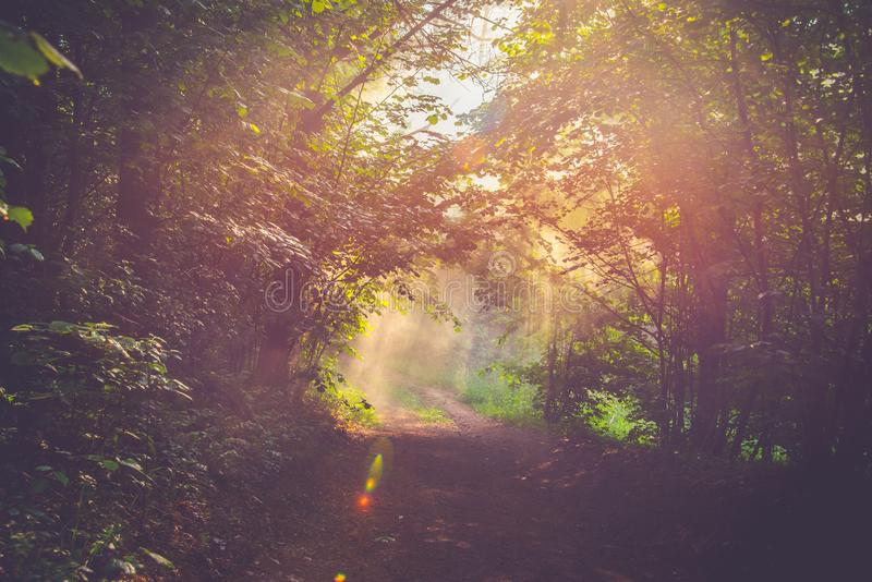 Beautiful forest view at sunrise stock photo