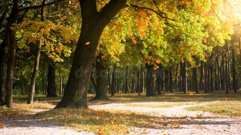 Beautiful forest in windy sunny autumn day stock images