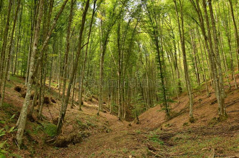 Beautiful forrest during summer royalty free stock photography