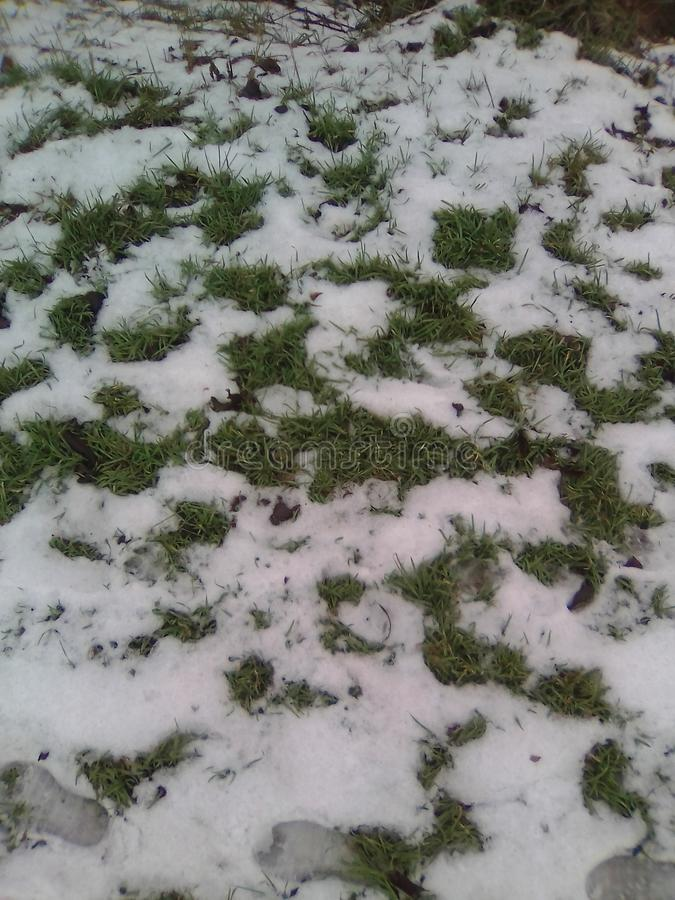 Beautiful Foto . The grass is trying to get through the cold snow ..... stock photo