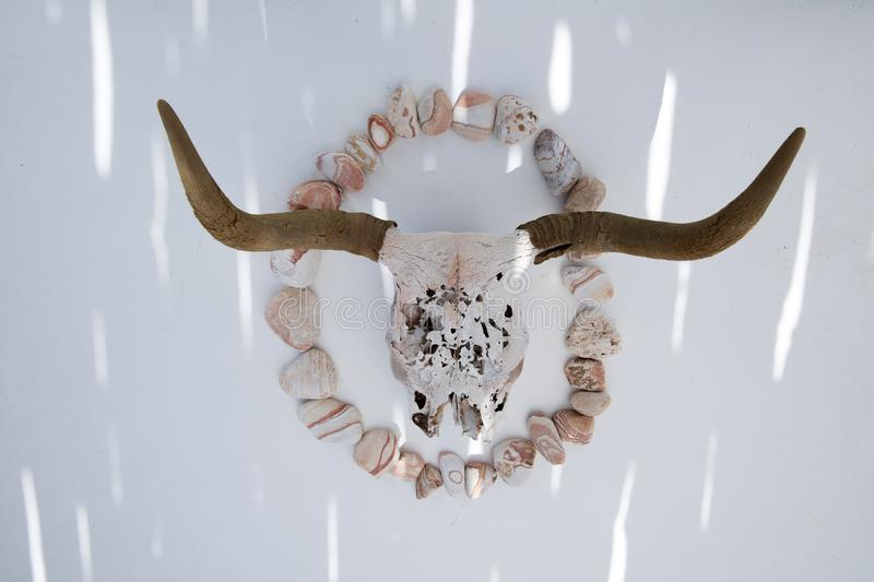 Southwestern Skull And River Sand Stone. A beautiful fragile old found cow skull photographed in splashes of light on white background with a circle of red stock photo