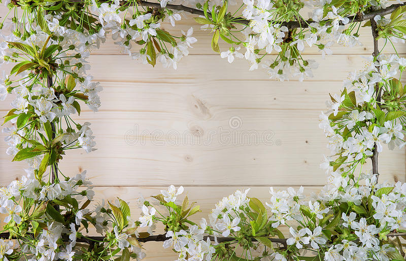 Beautiful frame with flowers of cherry, the Spring summer stock images