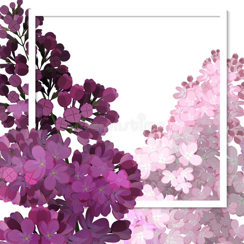 A beautiful frame passing through the flowers of lilac. royalty free illustration
