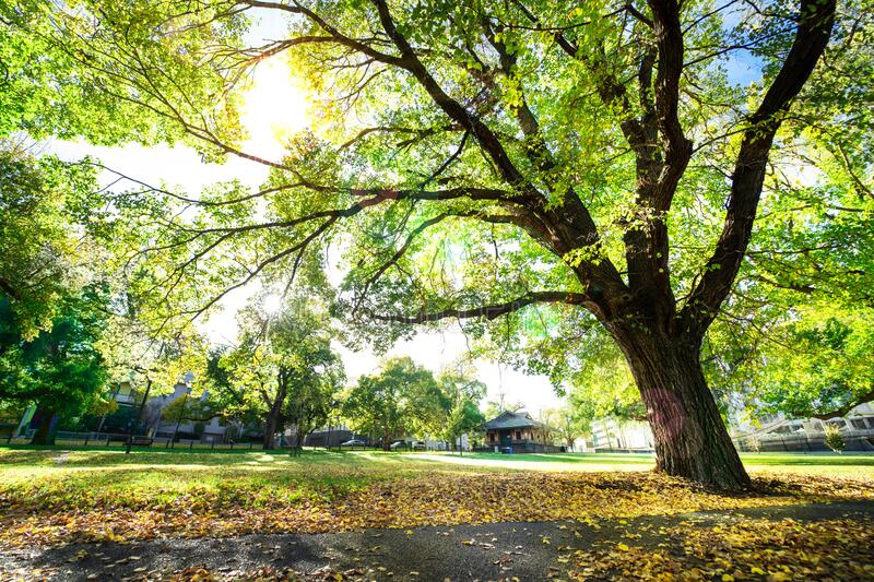 Beautiful fresh air and bright morning for exercise. Green clean environment for living. Trees in the park. royalty free stock images