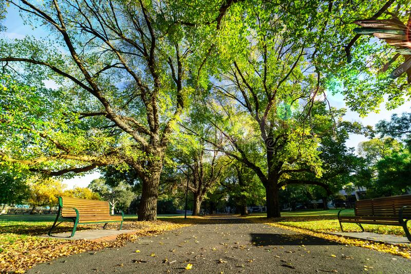 Beautiful fresh air and bright morning for leisure activity. Clean environment. Trees in the park. stock photography