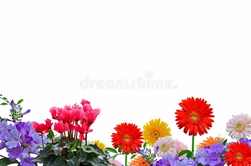 Beautiful colored flower collection on white background. Beautiful fresh and bright colored flower of plant collection on white background royalty free stock image