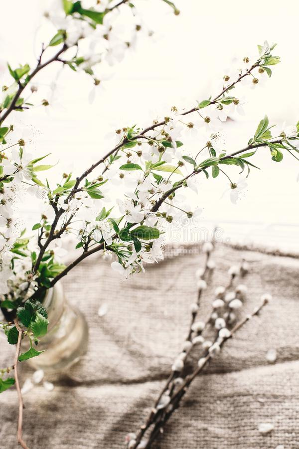 beautiful fresh cherry branches with white flowers in simple vase on wooden background in morning light. hello spring royalty free stock photo