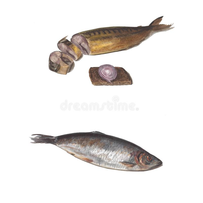 Beautiful fresh fish for cooking. Herring and smoked mackerel. Watercolor illustration, objects isolated on white vector illustration