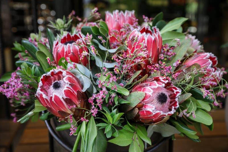 Beautiful fresh flower arrangement of Protea macrocephala flowers. stock image