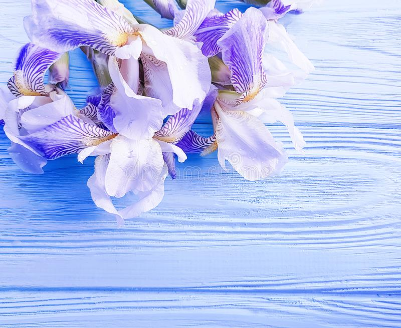 Beautiful Purple Irises on an Elegant Cream Background Floral Gift Wrap