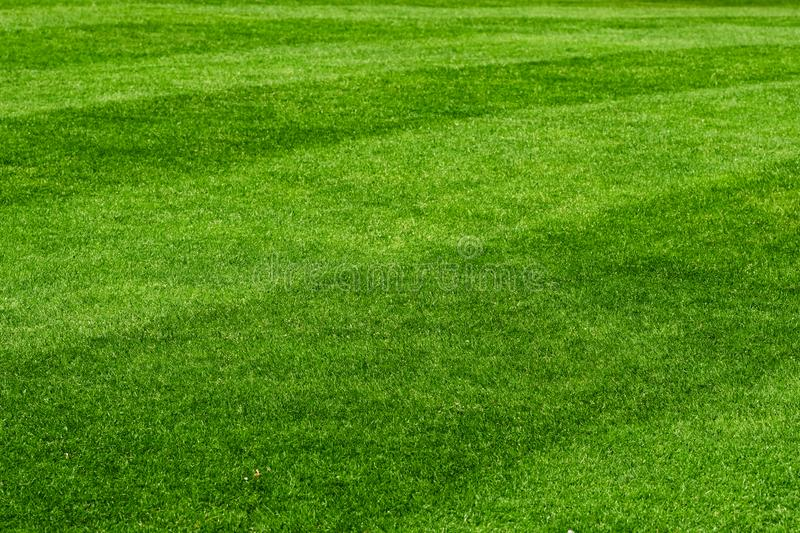 Beautiful fresh green lawn field background. Close-up royalty free stock images