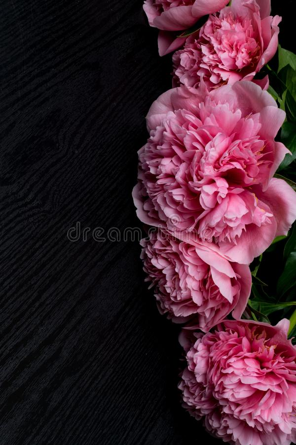 beautiful fresh peonies on wooden surface. Floral frame with pink peonies on wooden background royalty free stock images