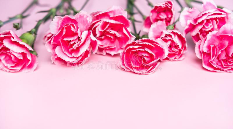 Pink clove flowers stock photos