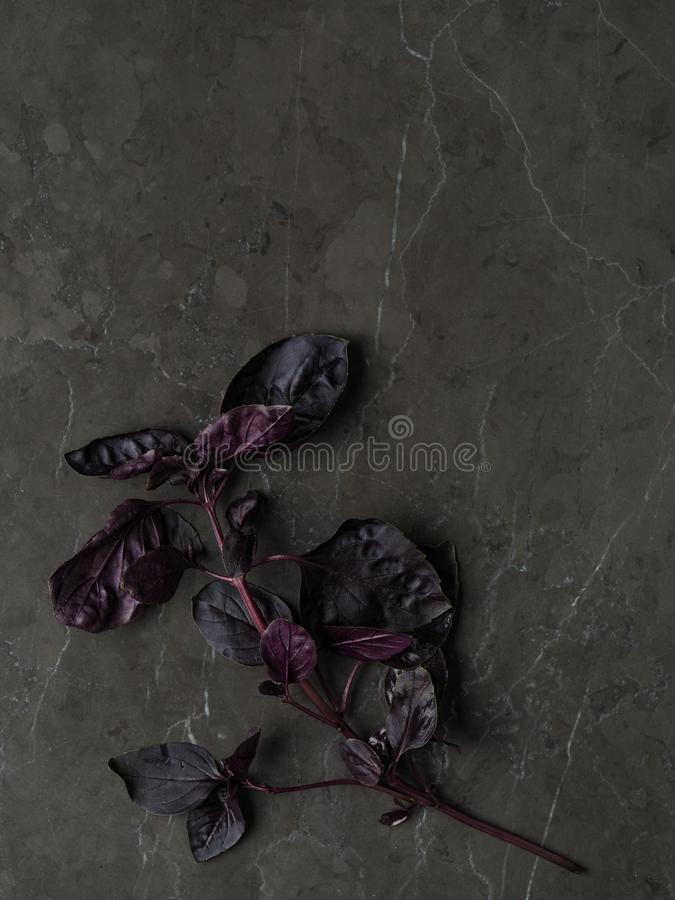 Beautiful fresh purple basil leaves with stems on a marble background. High definition photo stock images
