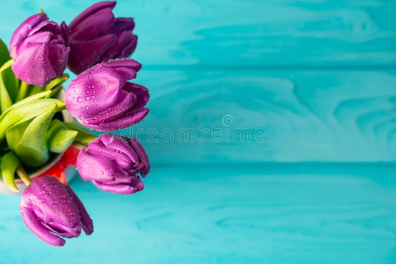 Beautiful fresh purple tulips bouquest on blue wooden background, holiday card royalty free stock image