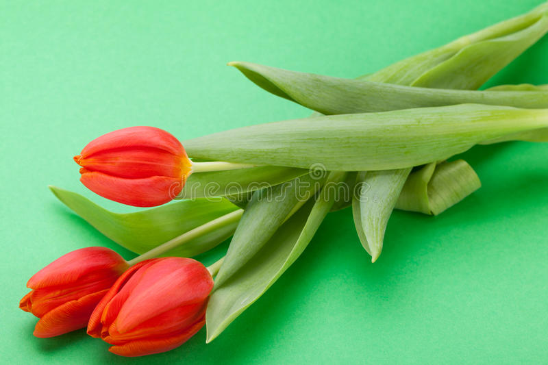 Download Beautiful Fresh Red Tulips For A Loved One Stock Photo - Image: 38574142