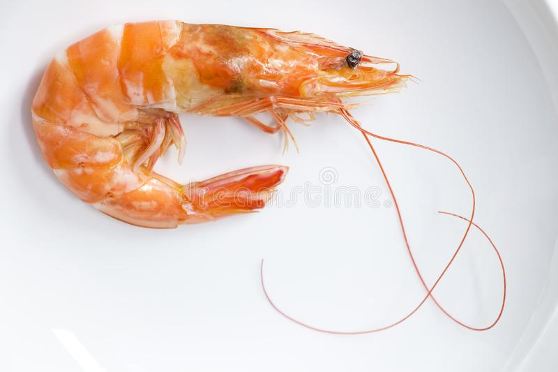 Beautiful fresh shrimps boiled on white plate background. Seafood tasty concept stock photos