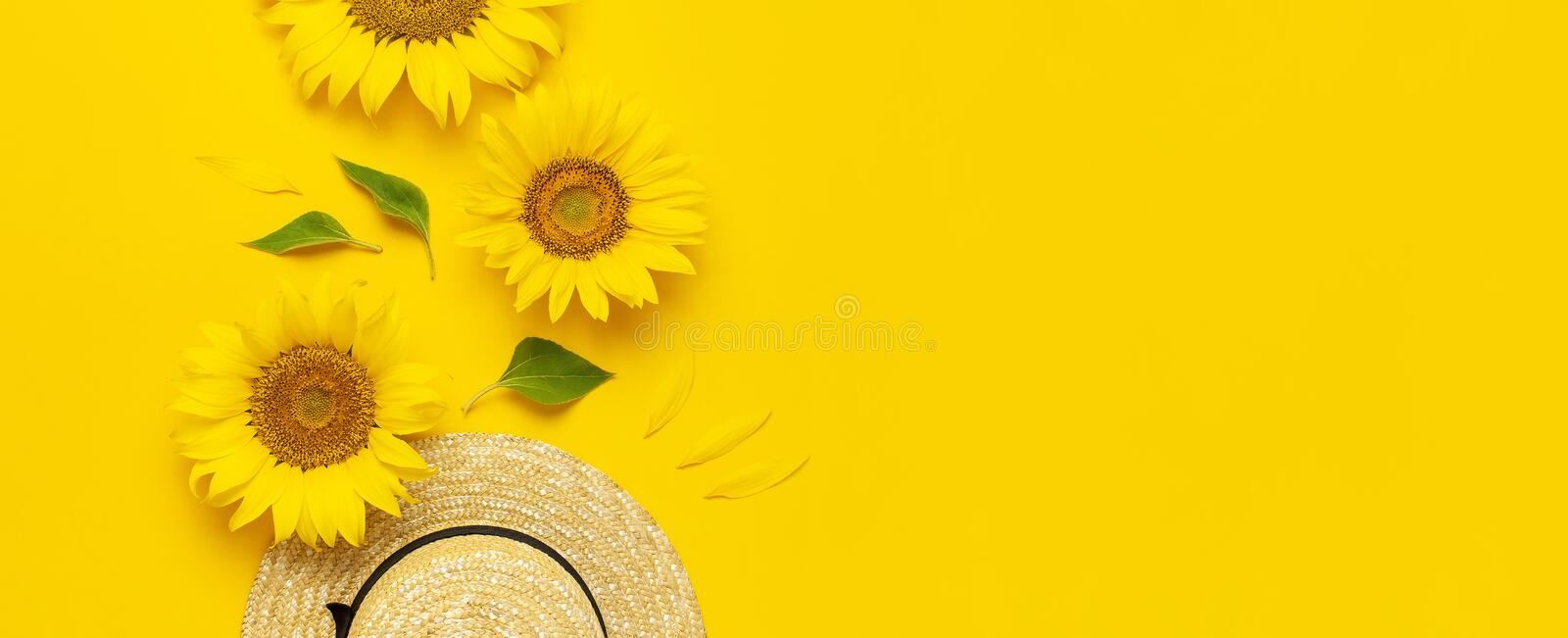 Beautiful fresh sunflowers, straw hat on bright yellow background. Flat lay top view copy space. Autumn or summer Concept, harvest stock photos