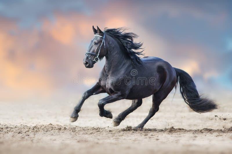 Beautiful frisian stallion royalty free stock photography