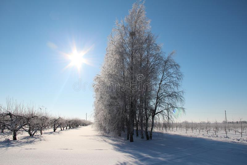 Clear frosty day in the open air. A beautiful frosty morning, the snow crunches under your feet. Cold air is still hovering around, but the sun is already royalty free stock photography