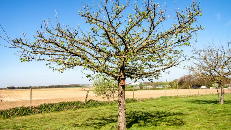 Beautiful fruit tree with few white flowers and a little birdhouse in the orchard royalty free stock photos