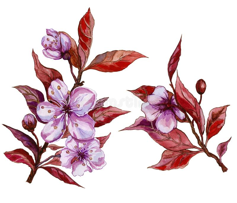 Beautiful fruit tree flower on a twig. Floral set of two twigs in pink and red color. Spring flourish illustration. stock illustration
