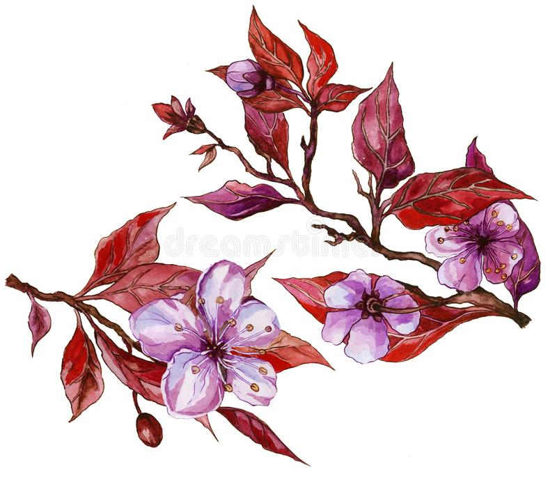 Beautiful fruit tree flower on a twig. Floral set of two twigs in purple and red color. Spring flourish illustration. vector illustration