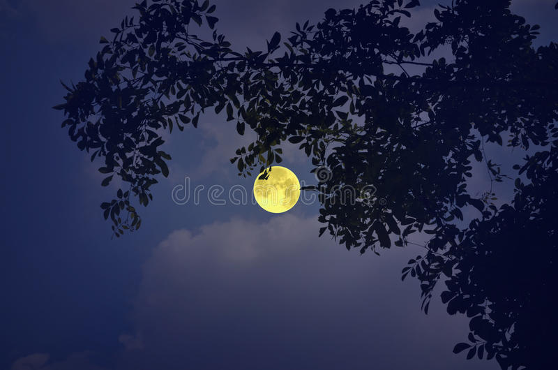 Beautiful full moon with cloudy sky. In a romantic night stock photos