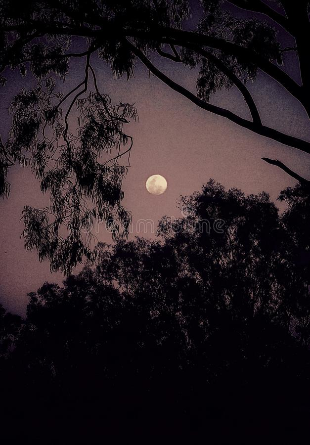 A beautiful full moon view through the trees. An illustrative image of a beautiful moon view through the trees in the night of countryside stock image