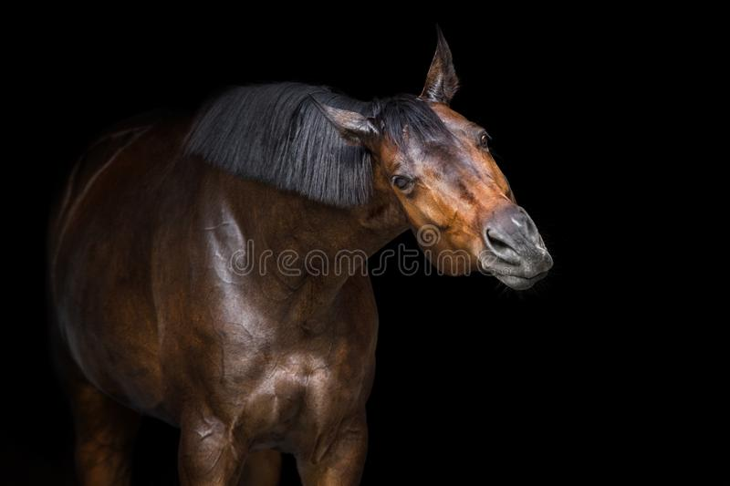 Horse funny portrait royalty free stock photo