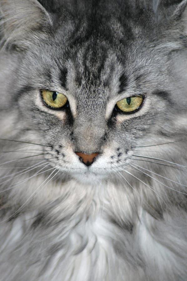 Beautiful Fur stock photo