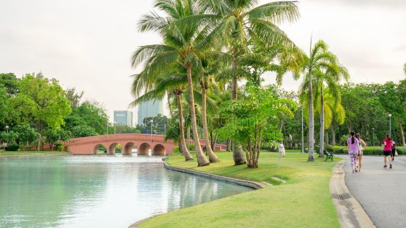 Beautiful garden in Chatuchak park Bankok Thailand, fresh green grass lawn yard under coconut palm trees beside a lake. Orange concrete arch curve brige royalty free stock photos