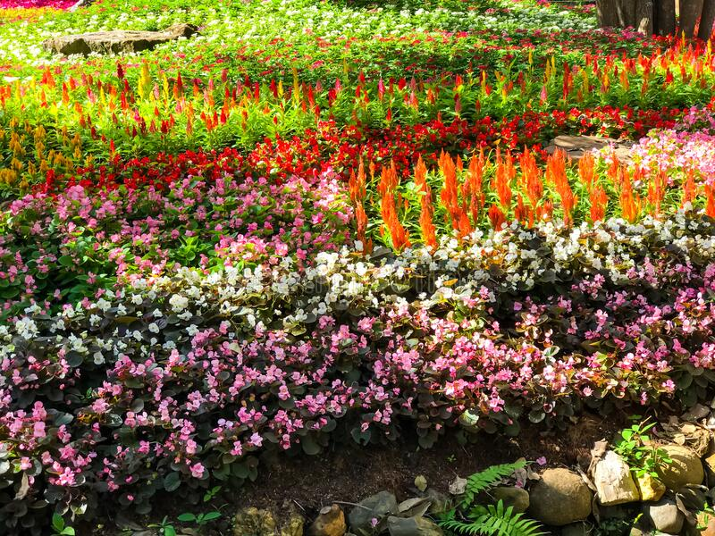 Garden of colorful flowers. Beautiful garden of colorful flowers royalty free stock photo