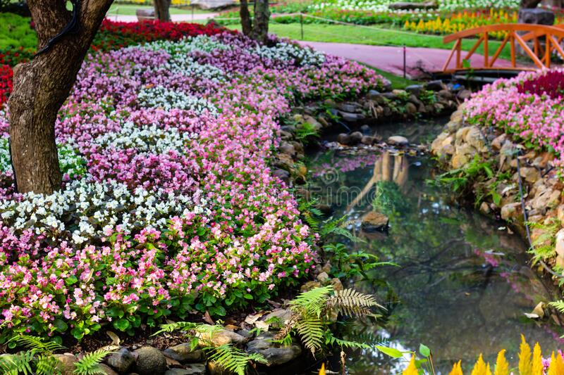 Garden of colorful flowers. Beautiful garden of colorful flowers stock images