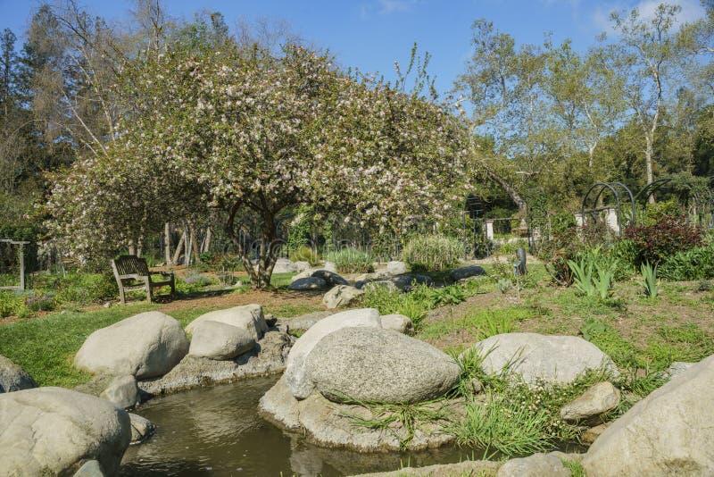 Beautiful Garden Of Descanso Garden Stock Image - Image of