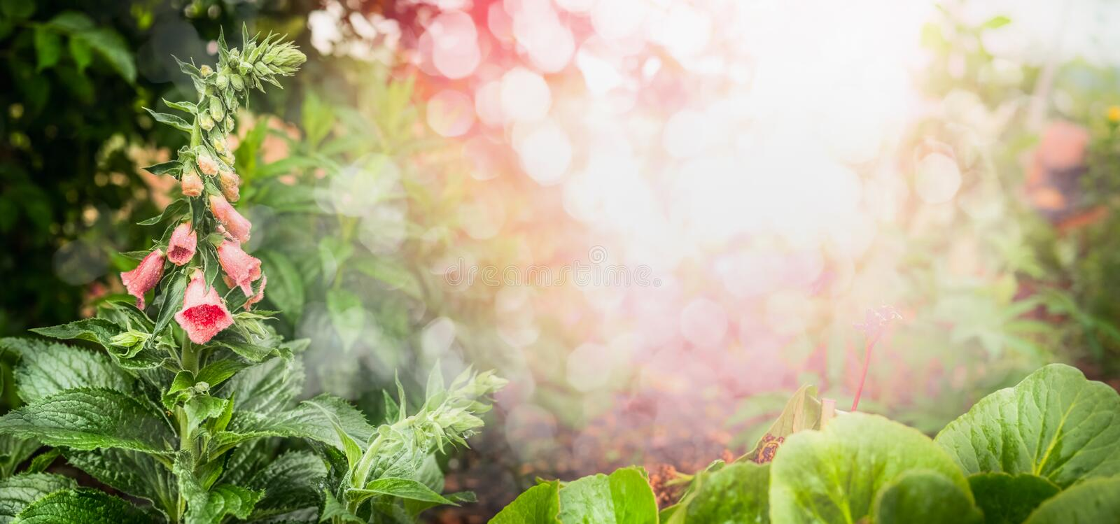 Beautiful garden with flowers, green foliage , sunshine and bokeh, banner. stock photos