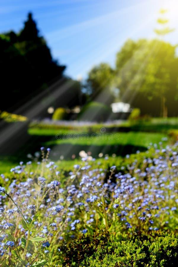 Beautiful garden lit by sunshine. stock photo