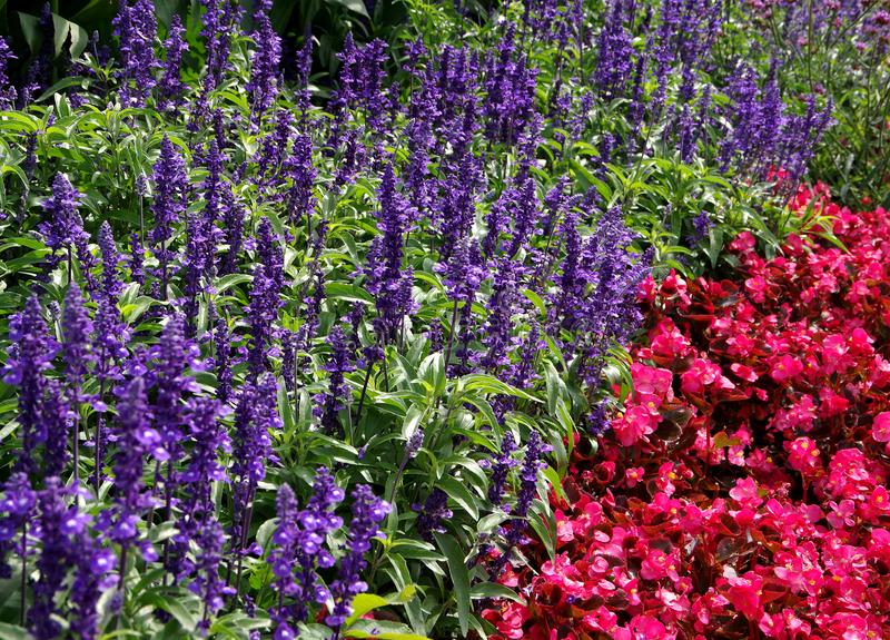 Beautifully laid flowerbed with lavender. Beautiful garden, ornamental garden, successful garden design, gardener happiness, joy of summer Flowers royalty free stock photos