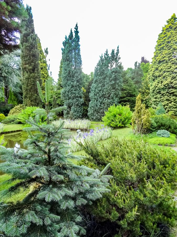 Beautiful garden with conifers and a pond royalty free stock image