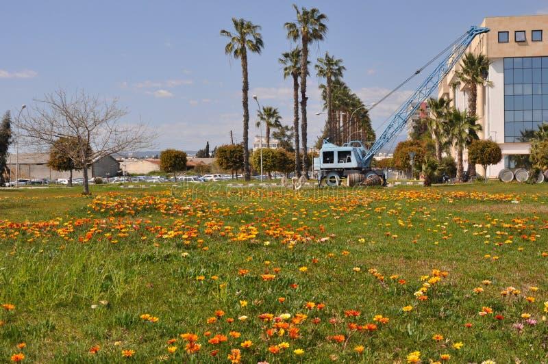 The beautiful gazania flower in garden royalty free stock photography