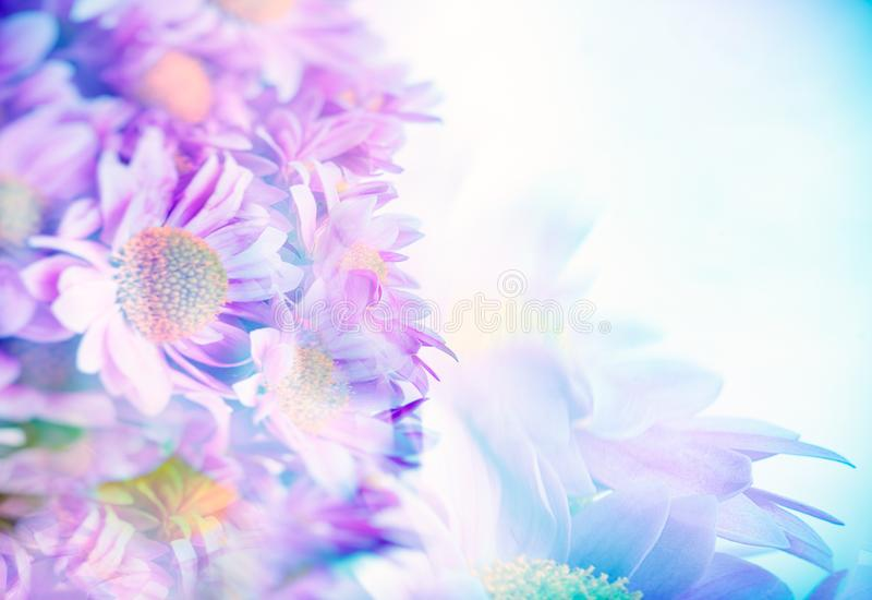 Beautiful gentle daisy flowers. Border of a beautiful pink blue daisy flowers, gentle flower bouquet, fine art background, selective focus, tender greeting card stock image
