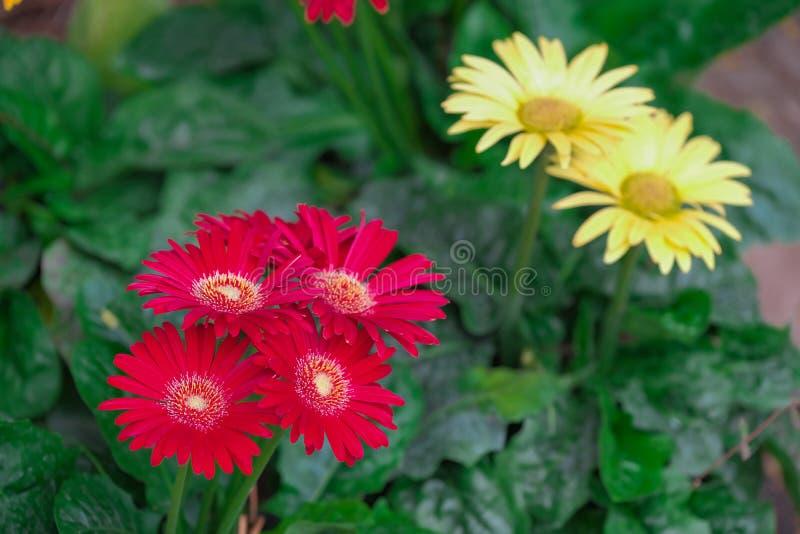 Beautiful gerbera flowers on tree royalty free stock photo