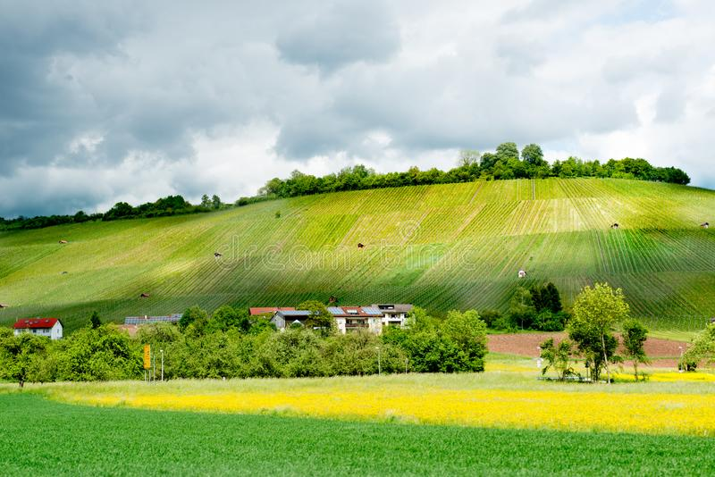 German vineyard in spring with cloudy sky, sunlit on vineyard and rape field in front, Germany stock photography