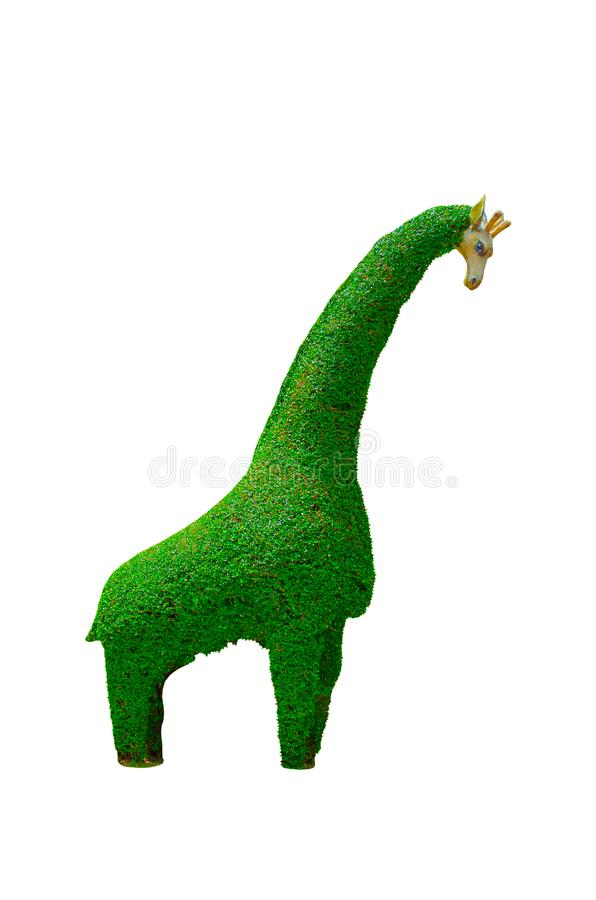 Giraffe dwarfed design hedges cut green tree isolated on white background. A beautiful Giraffe dwarfed design hedges cut green tree isolated on white background royalty free stock photos