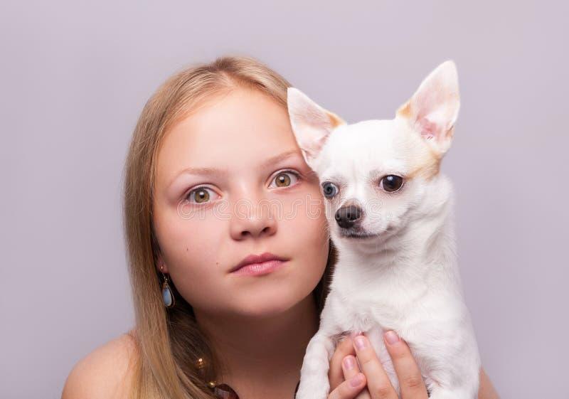 Beautiful girl with chihuahua stock photo
