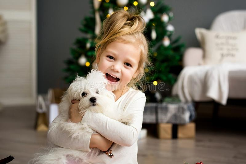 Beautiful girl with dog sitting near the Christmas tree. Merry Christmas and Happy Holidays. stock photo