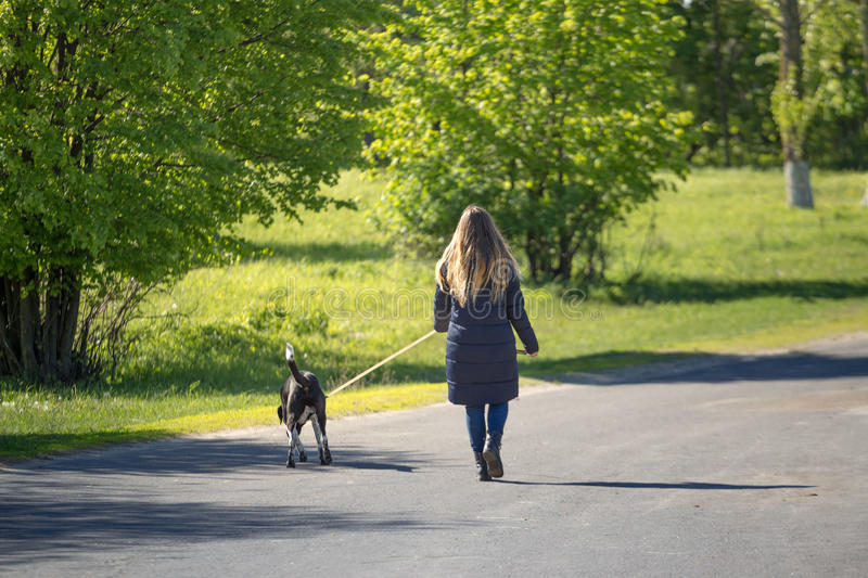 Beautiful girl with a dog on a walk. stock image